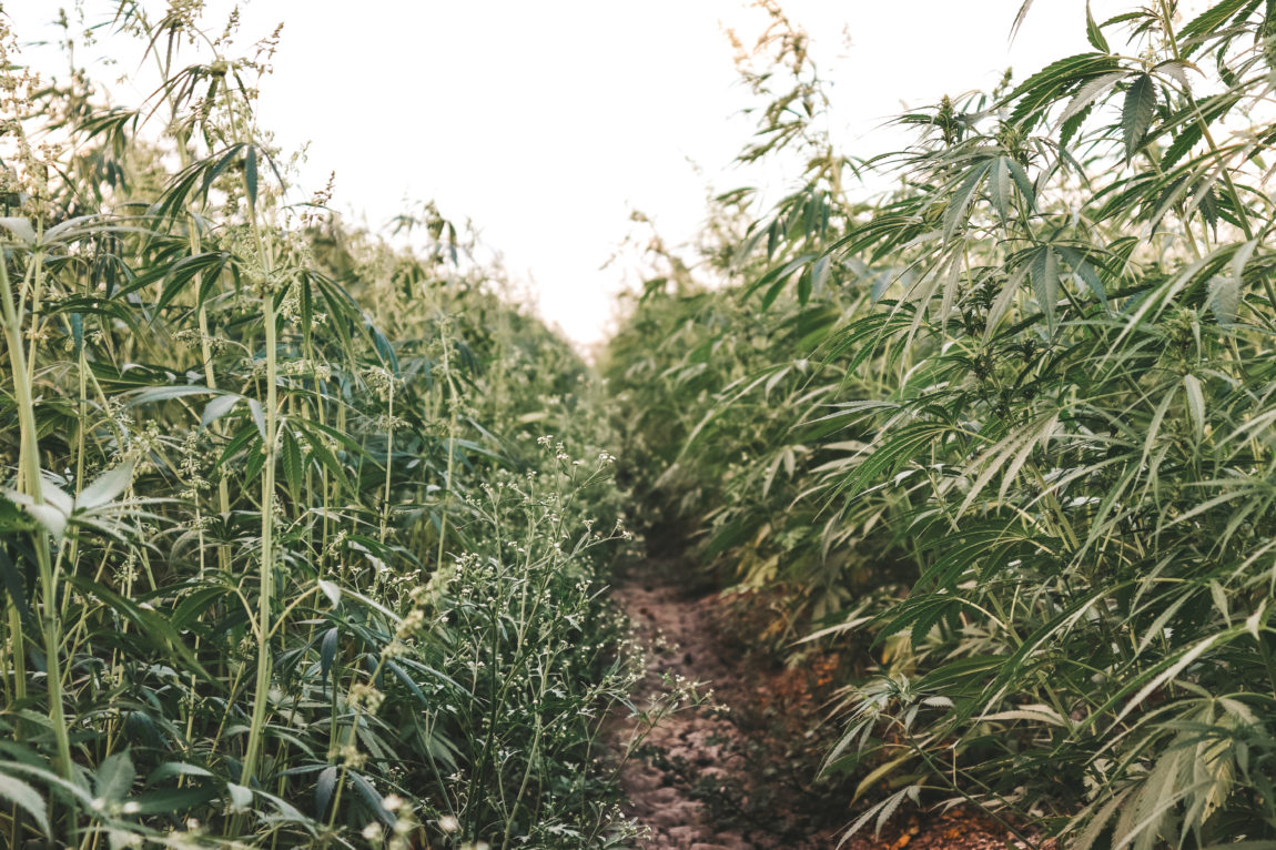 Hemp Farms Australia