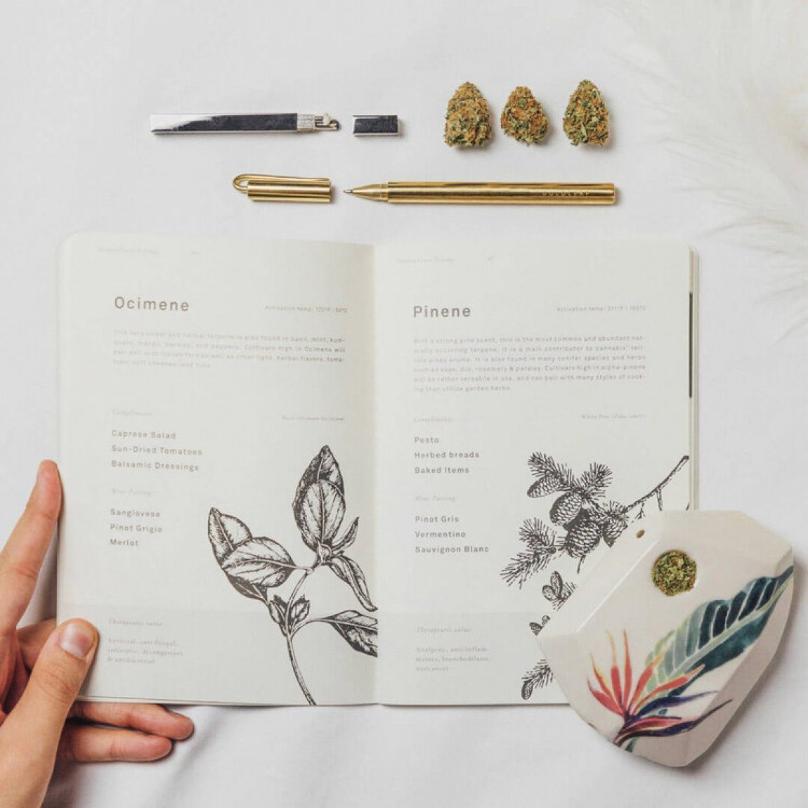An Expert's Guide to Keeping a Cannabis Journal